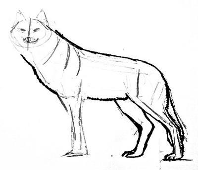 Урок рисования волка