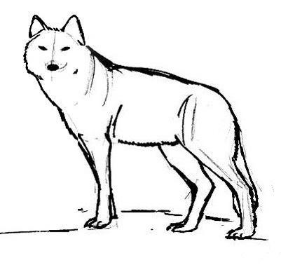 Рисунок-раскраска Волк