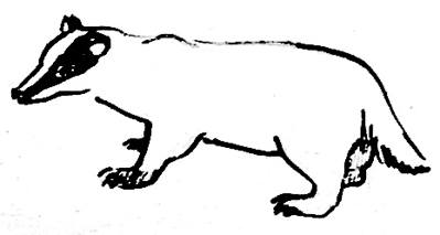 Поэтапный рисунок барсука 1