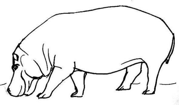 Бегемот рисунок