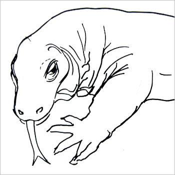 Рисунок головы комодского дракона