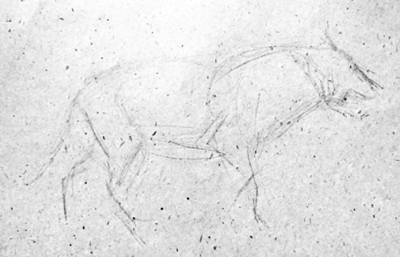 Волк -крисунок карандашом
