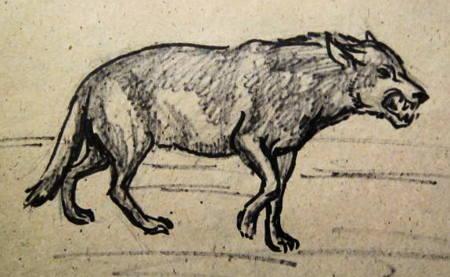 Рисунок волк