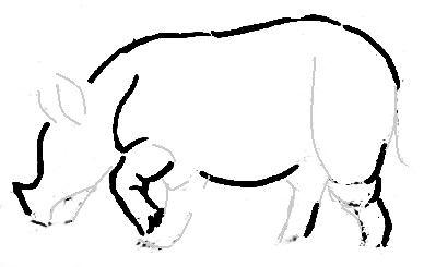 Нарисуем носорога реалистически