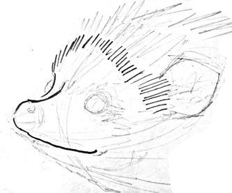 Рисуем мордочку ежа