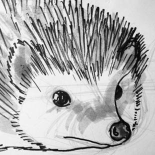 Голова ежа рисунок
