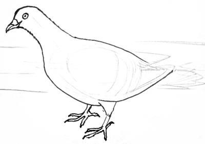 Нарисуем голубя