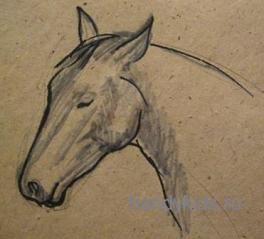 Рисуем лошадь поэтапно