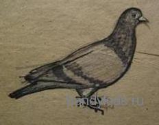Рисунок голубь