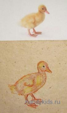 Как нарисовать утёнка