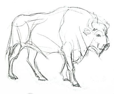 Зубр -рисунок карандашом