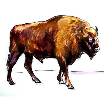 Рисунок Зубр