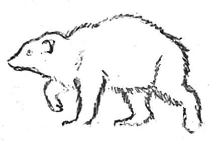Росомаха -рисунок 2