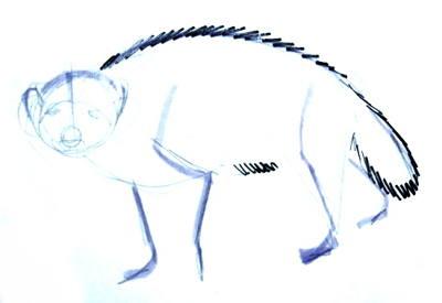 Рисуем лесного зверя росомаху