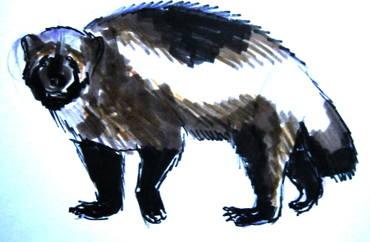 Рисунки диких зверей -росомаха.