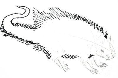Нарисуем американского дикобраза