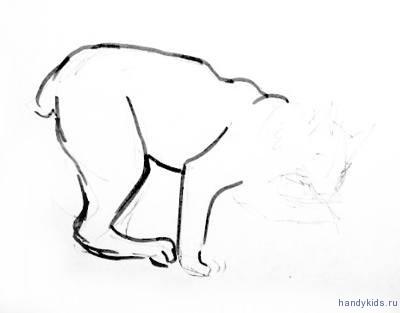 Поэтапный рисунок рыси