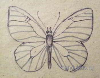 Внешнее строение бабочки