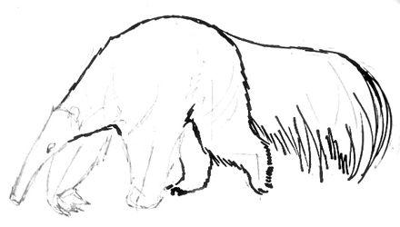 Урок поэтапного рисования Муравьеда