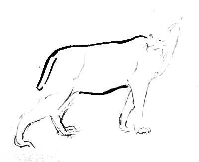 Рисуем рысь