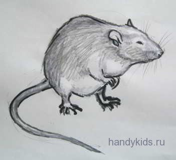 Рисунок крыса