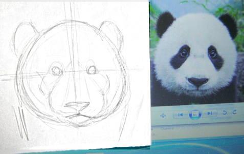 как нарисовать голову и морду панды