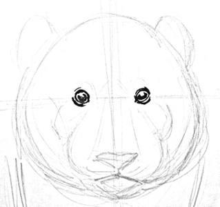Нарисуем голову панды