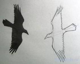 Как рисовать птиц