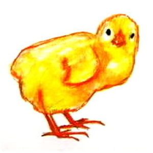 Цыплёнок -рисунок 2