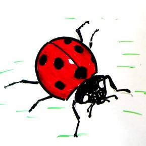 Реалистический рисунок жука божьей коровки