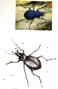 Как нарисовать жука