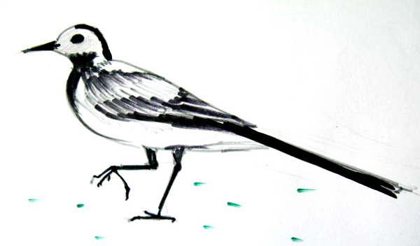 Рисунок трясогузка