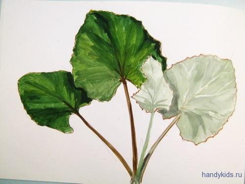 Как нарисовать листья мать-и-мачехи