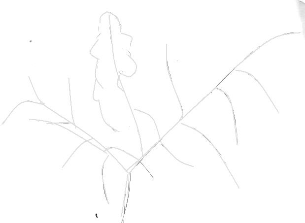 Схема строения ветки сирени