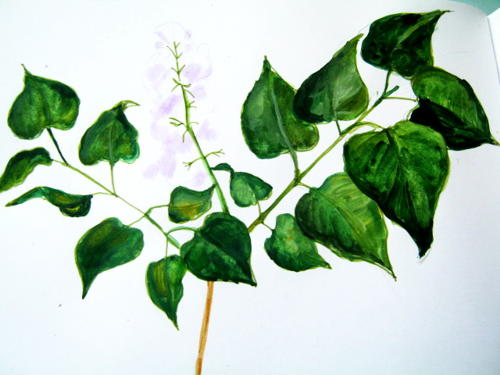 Рисунок -листья сирени