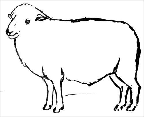 Барашек рисунок 2
