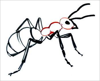 Как нарисовать муравья поэтапно