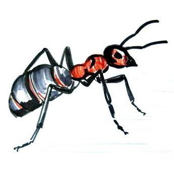 Рисунок муравей