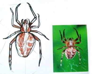 Рисунок паук
