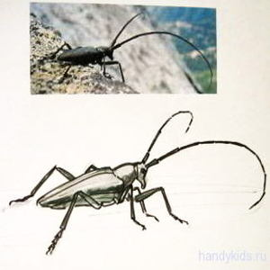 Как нарисовать жука-дровосека