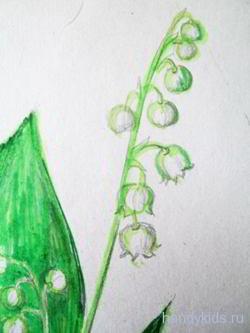 Цветы ландыша рисунок