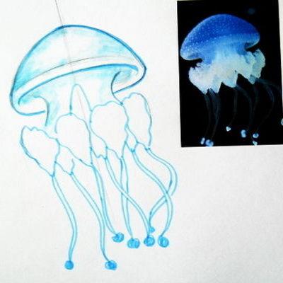 Как нарисовать медузу