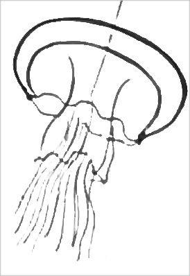 Раскраска Медуза 3