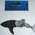 shark 002