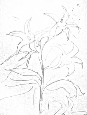 Колокольчики рисунок карандашом