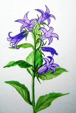Рисуем цветок -колокольчик