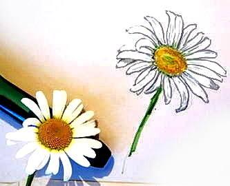Цветок ромашки рисунок
