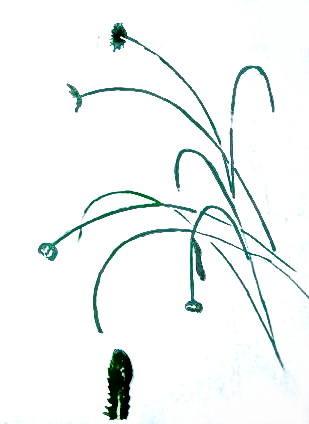 Рисуем ромашки