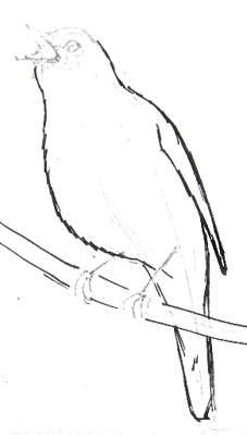 Урок рисования соловья