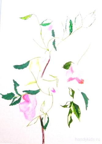 Рисуем цветы шиповника
